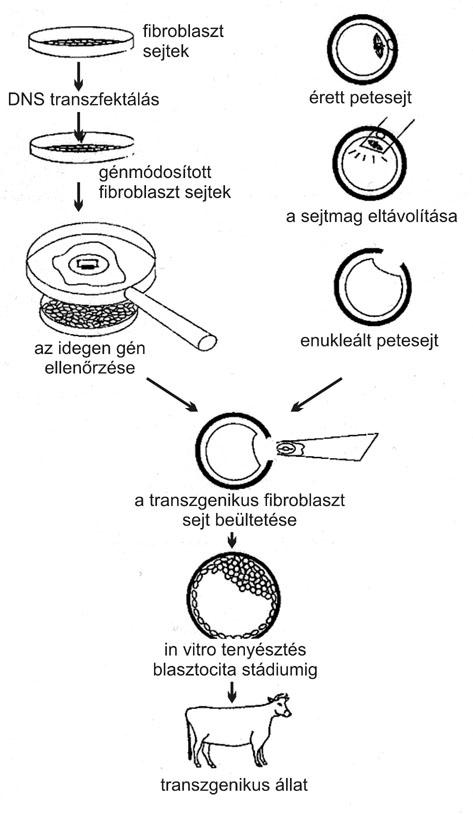 http://epa.oszk.hu/00600/00691/00002/solti03.jpg